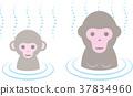 猴子 温泉 动物 37834960