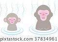 monkey, monkeys, hot 37834961
