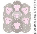 猴子 猴 下雪 37834964
