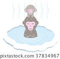 猴子 温泉 动物 37834967