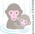 猴子 温泉 动物 37834968