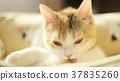 动物 猫 猫咪 37835260