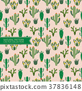 Natural Pattern,Cactus Plant,Desert Background 37836148