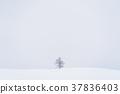 """""""ฮอกไกโด"""" ดินแดนแห่งขุนเขาและทุ่งหิมะของ Biei 37836403"""