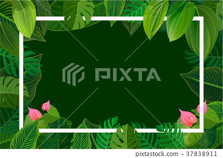 Bright natuer background with jungle plants.  37838911