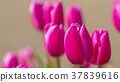식물, 꽃, 플라워 37839616