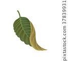 熱帶 樹葉 植物 37839931