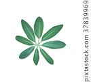 熱帶 植物 綠色 37839969
