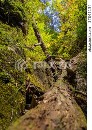 日本的三個主要山谷,十大隱藏地區之一,以及帶有紅葉的大杉谷(三重縣多崎郡大田町) 37841154