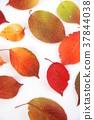 단풍, 가을, 잎 37844038