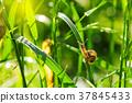 Little snail on green grass 37845433