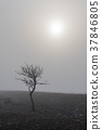 Solitude bare tree in the mist 37846805