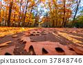 autumn leaves on sky 37848746