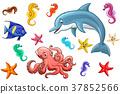 可爱 海洋 动物 37852566