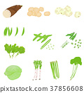 Spring vegetables (such as bamboo shoots) illustration set 37856608