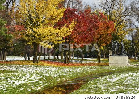 Asahikawa _ winter Tokiwa Park 37856824