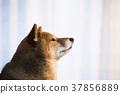 毛孩 狗 狗狗 37856889