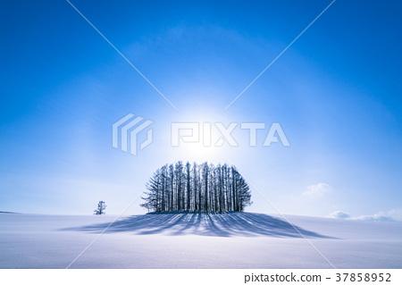 《Hokkaido》Winter Mild Seven Hill, Beautiful Illusionary Ring 37858952
