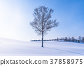 凍結的字段 柔和七之丘 美瑛町 37858975
