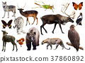 animal collection asia 37860892