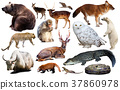 animal, collection, asia 37860978