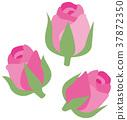 玫瑰 玫瑰花 蓓蕾 37872350