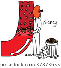 metaphor function of human kidney to filter wastes 37873655