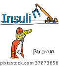 vector, insulin, pancreas 37873656