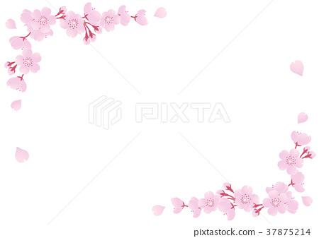 Cherry Blossoms 37875214