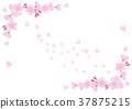 Cherry Blossoms 37875215