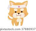 dog, dogs, Shiba 37880937