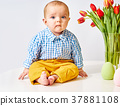 boy, tulips, cute 37881108