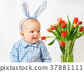 child, tulips, toddler 37881111