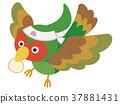 pheasant, green pheasant, japanese pheasant 37881431