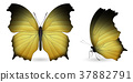 Set of butterflies isolated on white background 37882791