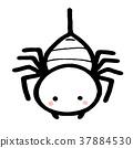 cartoon spider in hand drawn style. 37884530
