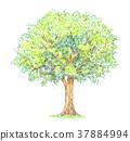 夏天 夏 树木 37884994