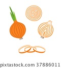 Whole bulb onion, half and onion rings. Vector 37886011