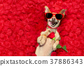 animal dog rose 37886343