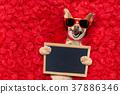animal dog sunglasses 37886346