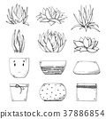 Sketch of different pots and succulents. 37886854