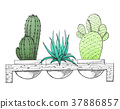 Sketch three succulents in pots on a wooden stand. 37886857
