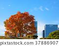 autumn, autumnal, maple 37886907