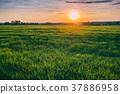 Spring Sun Shining Over Agricultural Landscape Of 37886958