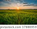 Spring Sun Shining Over Agricultural Landscape Of 37886959