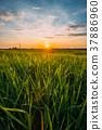 Spring Sun Shining Over Agricultural Landscape Of 37886960
