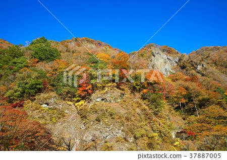 후쿠로다노타키, 후쿠로다 폭포, 단풍 37887005