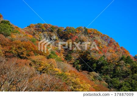후쿠로다노타키, 후쿠로다 폭포, 단풍 37887009