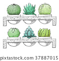 Sketch succulents in pots on a wooden stand. 37887015
