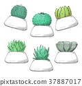Sketch of succulents in pots. 37887017